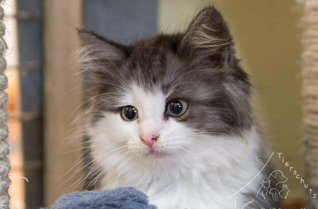Babykatzen (Freigänger)
