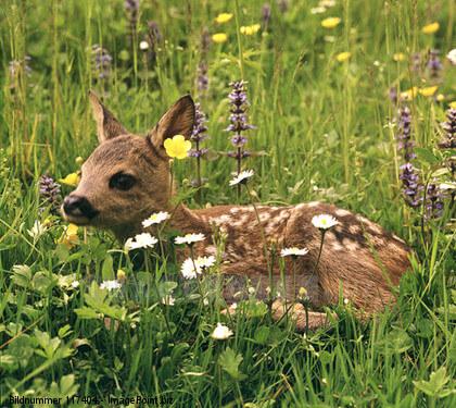 Frühjahr ist Jungtierzeit