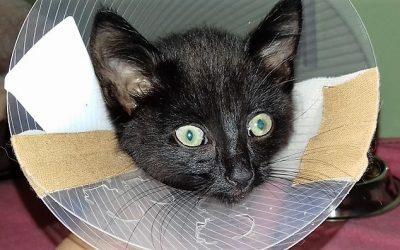 Spendenaufruf für verletzte Kitte