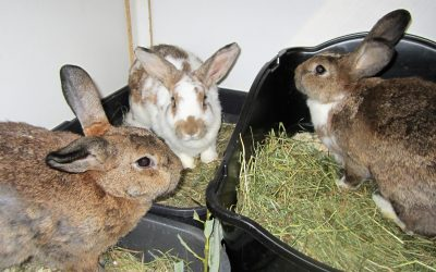 Mausi, Frieda, Lina