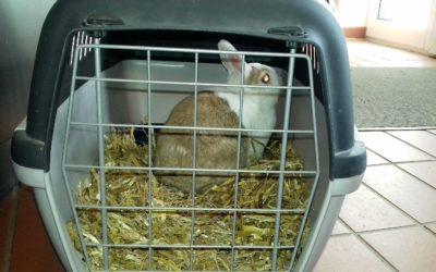 2 Kaninchen ausgesetzt in Ulzburg Süd
