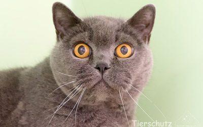 Katzenbesitzer aufgepasst