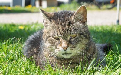 Kastrationsaktion für frei lebende Katzen ist beendet!