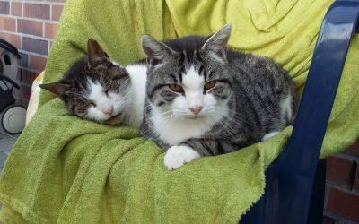 Unsere Hofkatzen