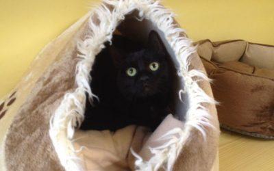 Babykatzen suchen ein Zuhause (Freigang)
