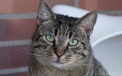 Aktion zur Kastration von freilebenden Katzen 2021