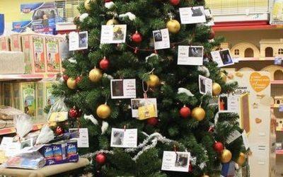 Unsere Wunschbäume stehen wieder in den Läden!