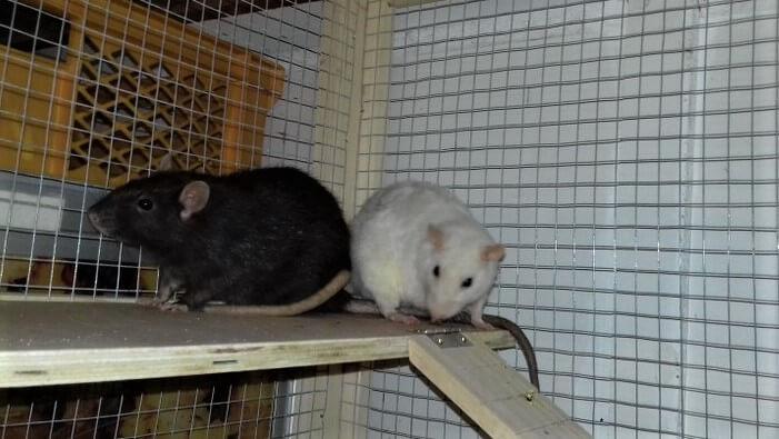 Milli & Ella