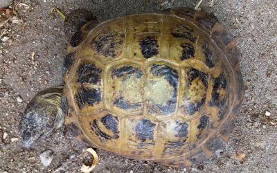 Fundschildkröte Norderstedt