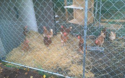 Hühner herzlich willkommen
