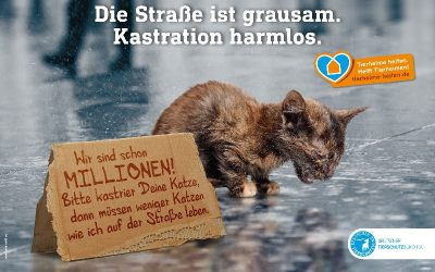 Katzen-Kastrationsaktion 15.10-12.11.18