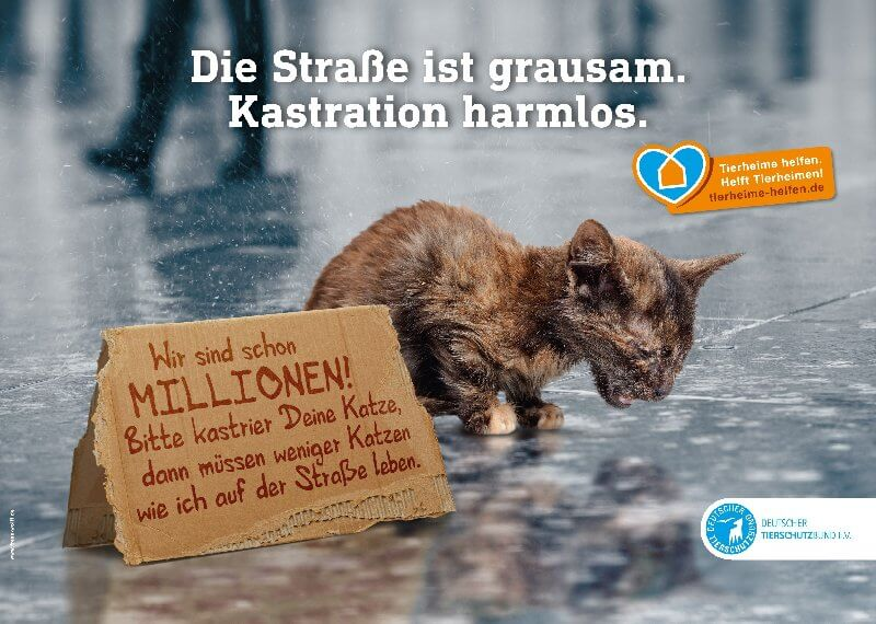 Katzen-Kastrationsaktion 15.10-12.11.18