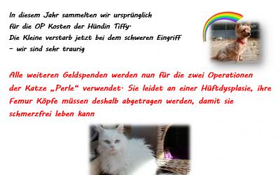 Tierbescherung im Tierheim