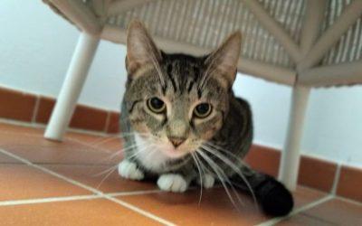 Aktion zur Kastration von freilebenden Katzen 2020